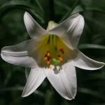 FlowerShow6