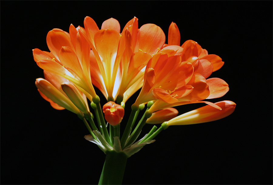 FlowerShowLast