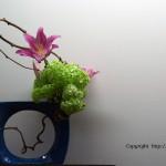 FlowerShow7-3