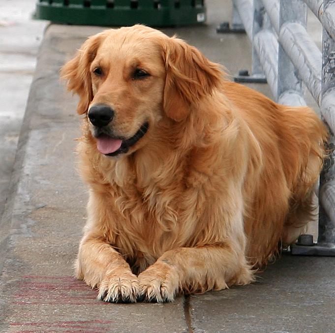 Fisherman Dog
